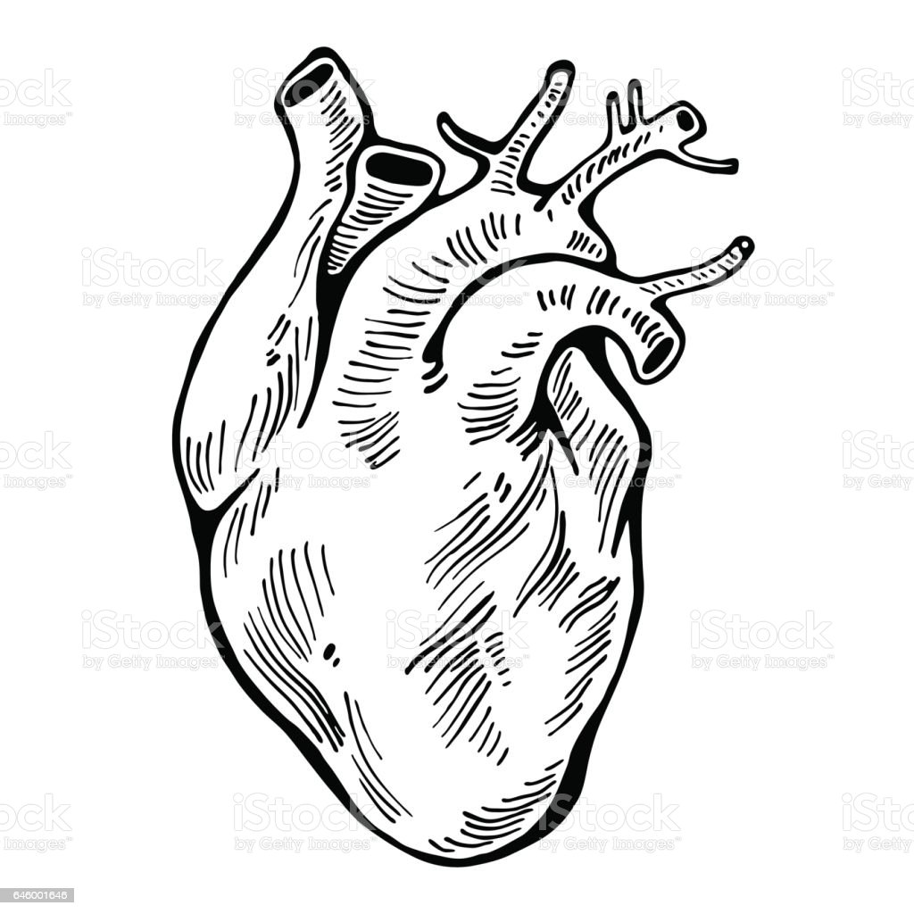 Human heart black line tattoo organ vector illustration stock vector human heart black line tattoo organ vector illustration royalty free human ccuart Gallery