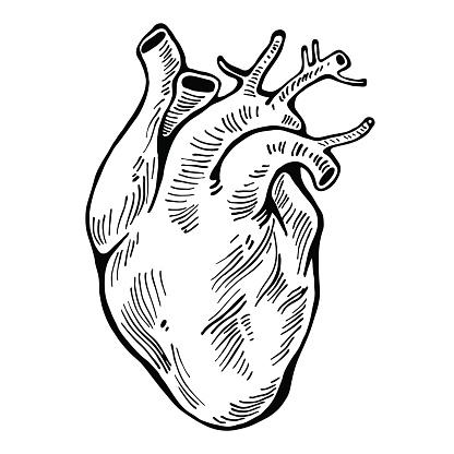Human Heart Black Line Tattoo Organ Vector Illustration ...