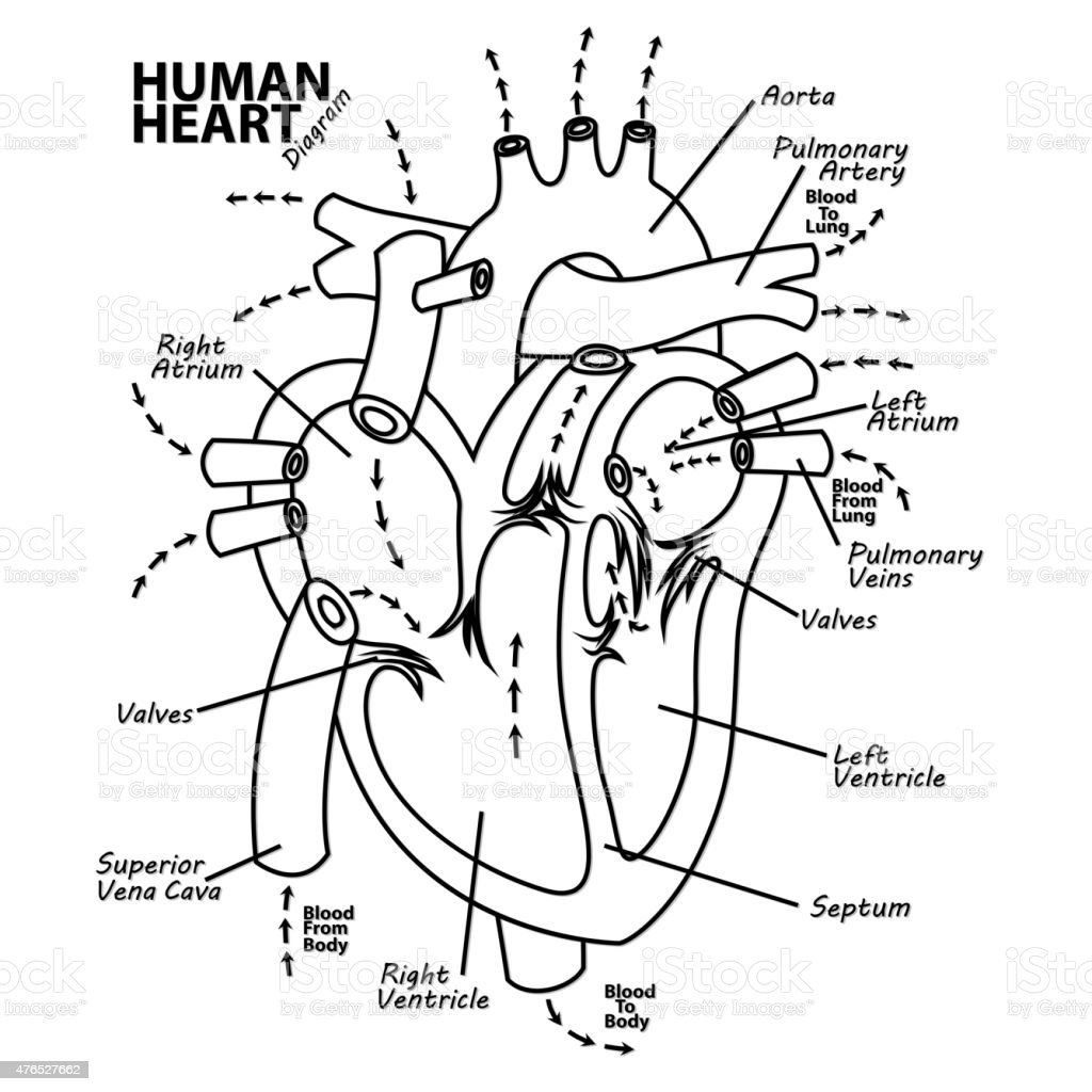 Human heart diagram anatomy tattoo vector art illustration