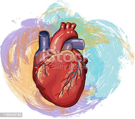 Drawing of Human heart. Elements are grouped.contains eps10 and high resolution jpeg.