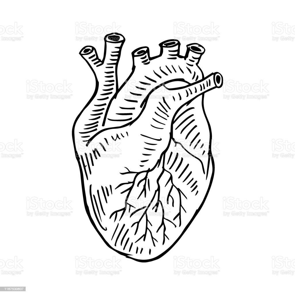 Illustration Humaine De Dessin De Main De Coeur Vecteurs