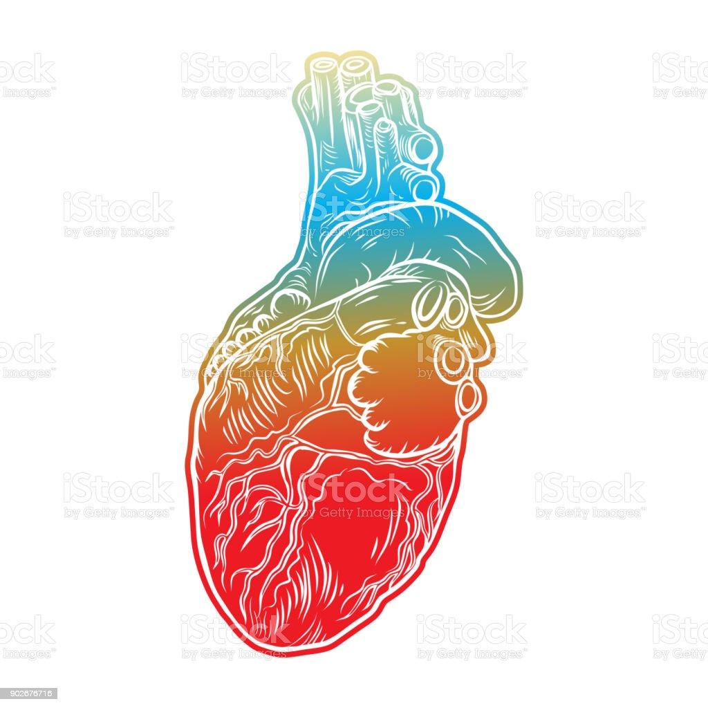 Menschlichen Herzen Hand Gezeichnet Fleisch Tattookonzept Der ...
