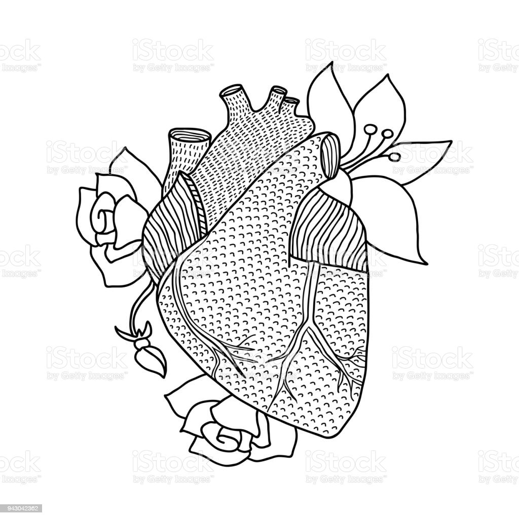 Human Heart Hand Drawn Isolated On A White Backgrounds Stock Vector ...