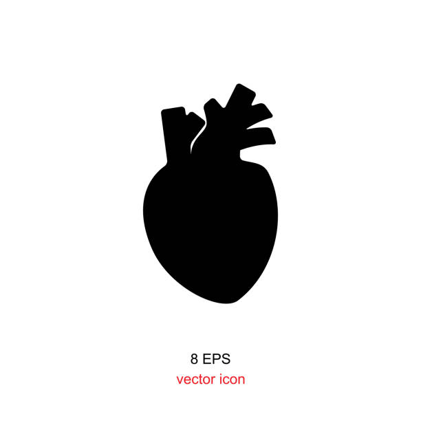 human heart icon Human heart logo or icon. Black silhouette isolated on white background human heart stock illustrations