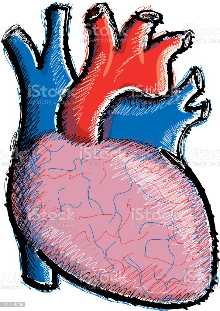 Human heart illustration royalty-free stock vector art