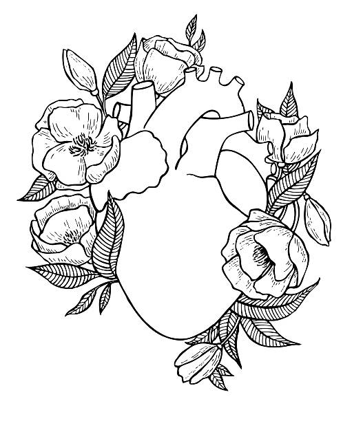 Human heart illustration with flowers. Human heart illustration with flowers. Great for valentine card or poster wild rose stock illustrations