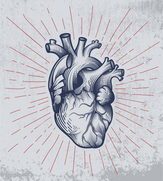 ilustraciones, imágenes clip art, dibujos animados e iconos de stock de corazón humano en la técnica del grabado con rayos de estrellas sobre fondo grunge. - biología