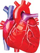 Human heart in low poly. Vector.