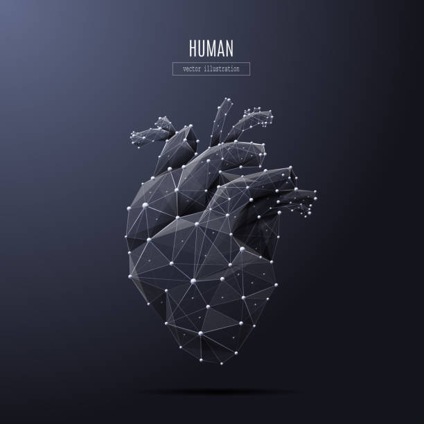 human heart low poly white Vector isolated heart low poly from metall wireframe and points. Polygonal 3D white human organ on dark background. Medicine concept with geometry triangle. Abstract mash line and point origami. human heart stock illustrations