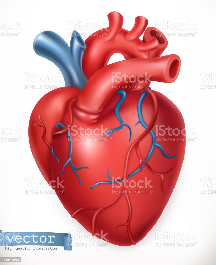 Menschlichen Herzen Medizin Innere Organe 3d Vektor Icon Stock ...