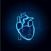 Polygonal human heart in low poly polygon style illustration with connecting points dots , mesh, isolated on ECG blue background. Anatomical heart for medical or scientific design, wireframe concept