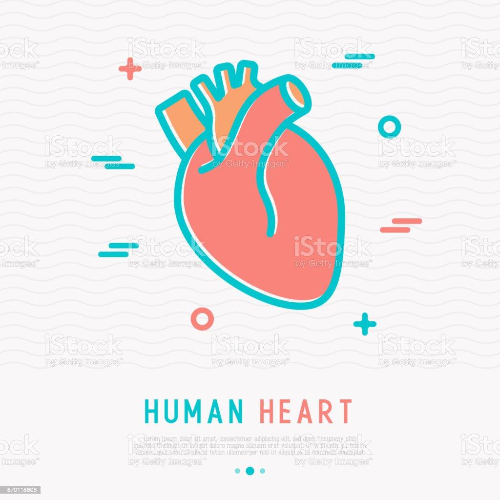 Human Heart Thin Line Icon Simple Vector Illustration Of Human