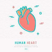 Human heart thin line icon. Simple vector illustration of human internal organ.