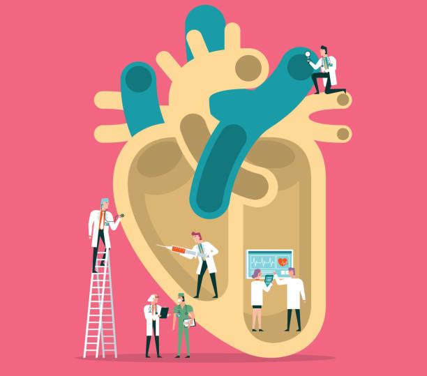 ilustrações de stock, clip art, desenhos animados e ícones de human heart - coração humano