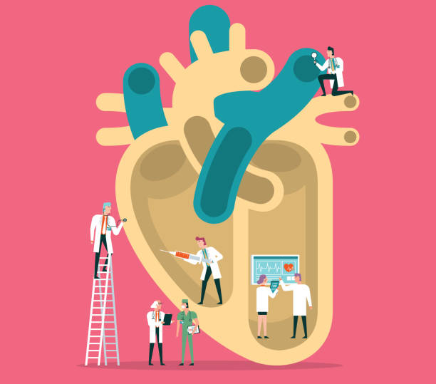 Human heart Team of doctors diagnose human heart human heart stock illustrations