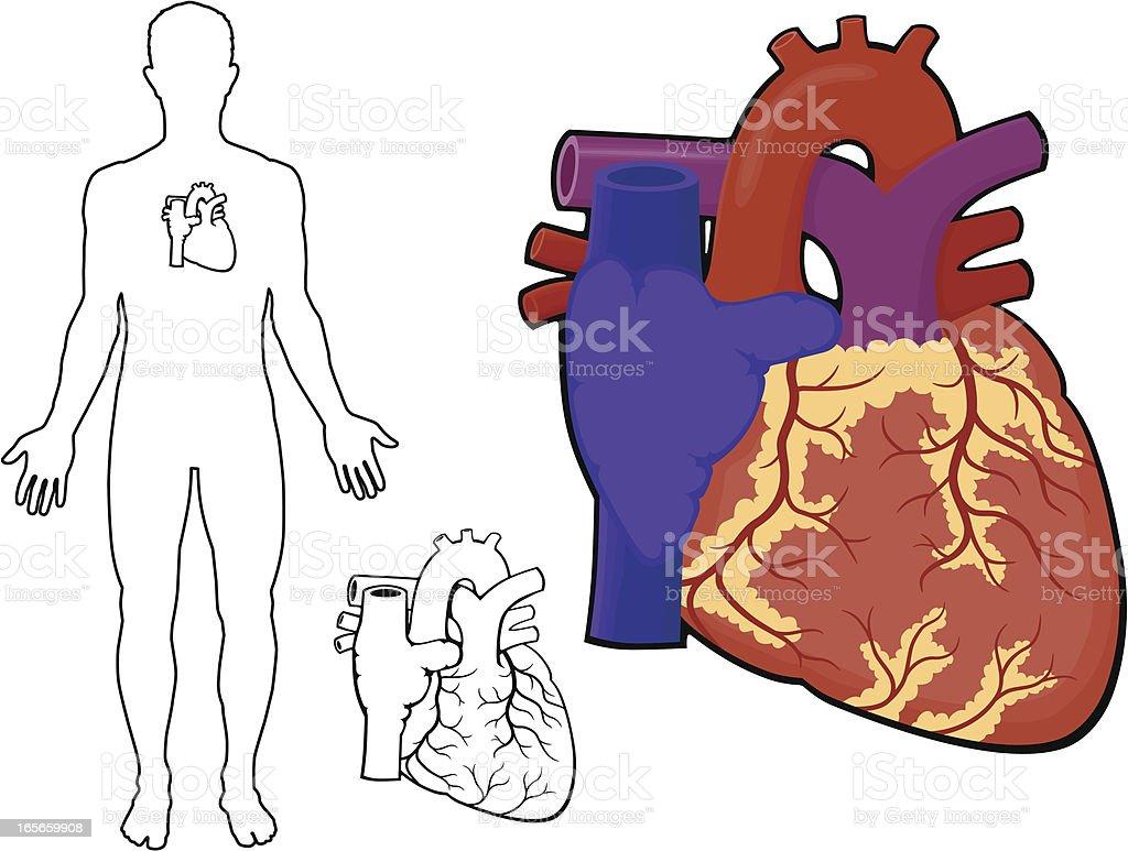 Human Heart royalty-free stock vector art
