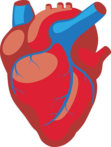 Royalty Free Cartoon Human Heart Clip Art, Vector Images ...