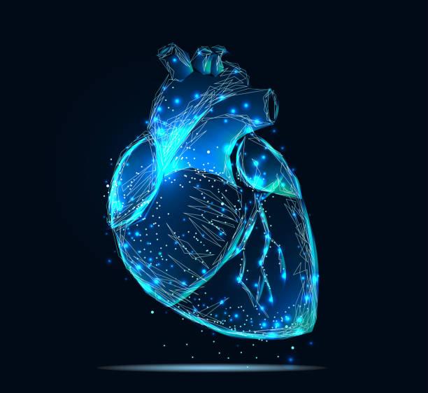 human heart Vector isolated heart. Low poly wireframe and points. Polygonal 3D human organ on dark blue background. Medicine concept with geometry triangle. Abstract heart pain mash line origami human heart stock illustrations