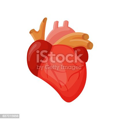 Human heart internal organ medicine anatomy element vector illustration. Respiratory people body part structure. Science system biological health symbol.
