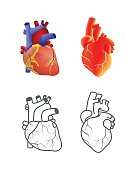 Human heart vector set isolated on white background.