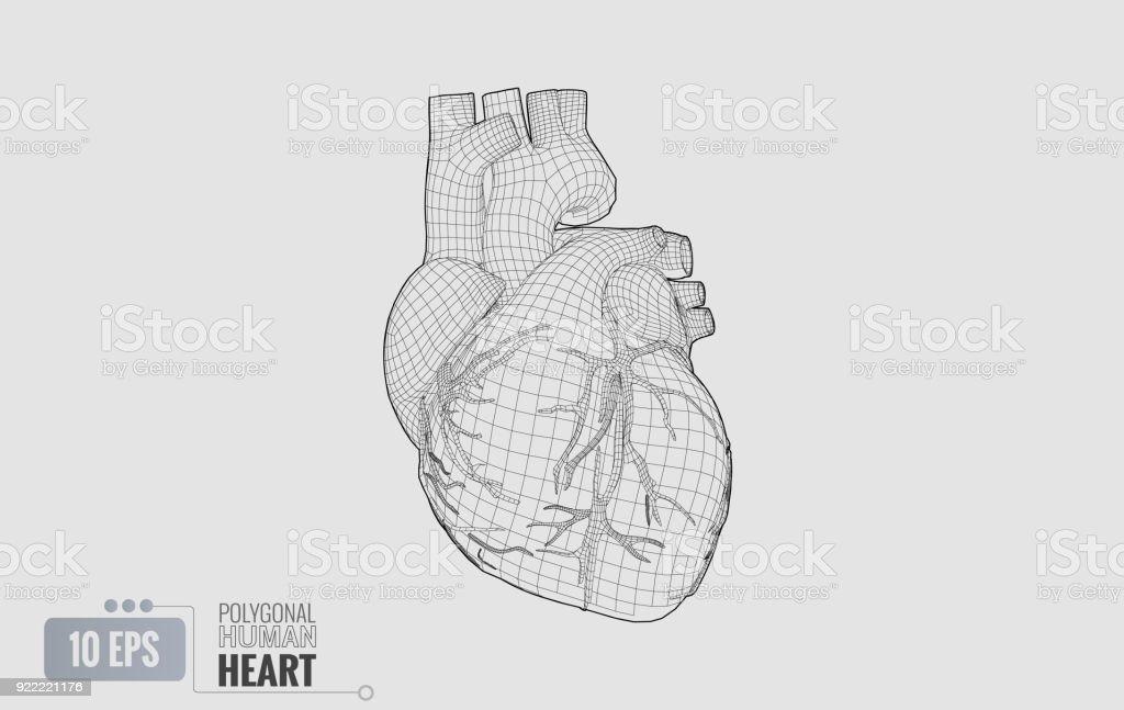 Human heart wireframe isolated on white BG vector art illustration