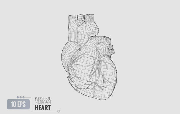 Best Human Heart Illustrations, Royalty-Free Vector