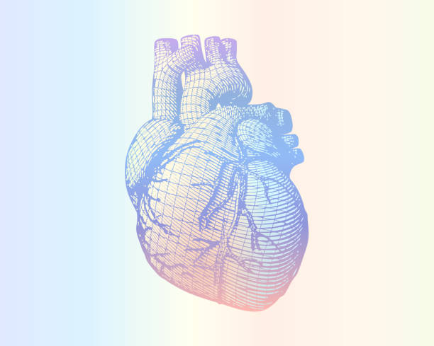 human heart wireframe on soft colorful gradient BG Human heart vector wireframe engraving drawing in retro style isolated on multi color ramp background human heart stock illustrations