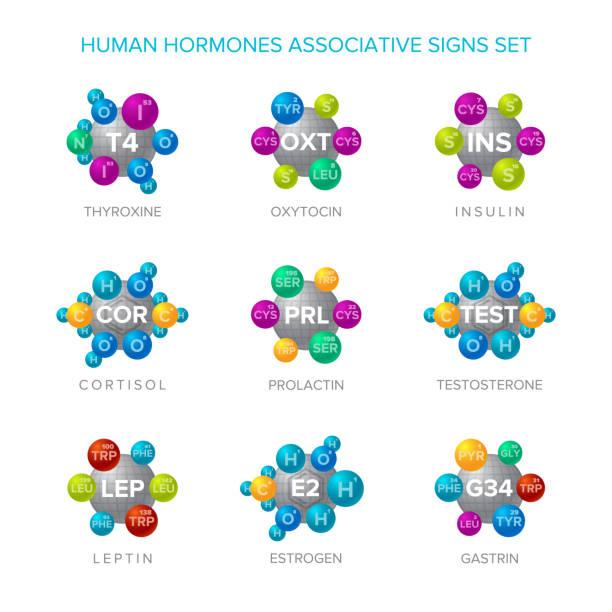 ilustraciones, imágenes clip art, dibujos animados e iconos de stock de las hormonas humanas vector de muestras con el conjunto asociativo de estructuras moleculares - thyroxine