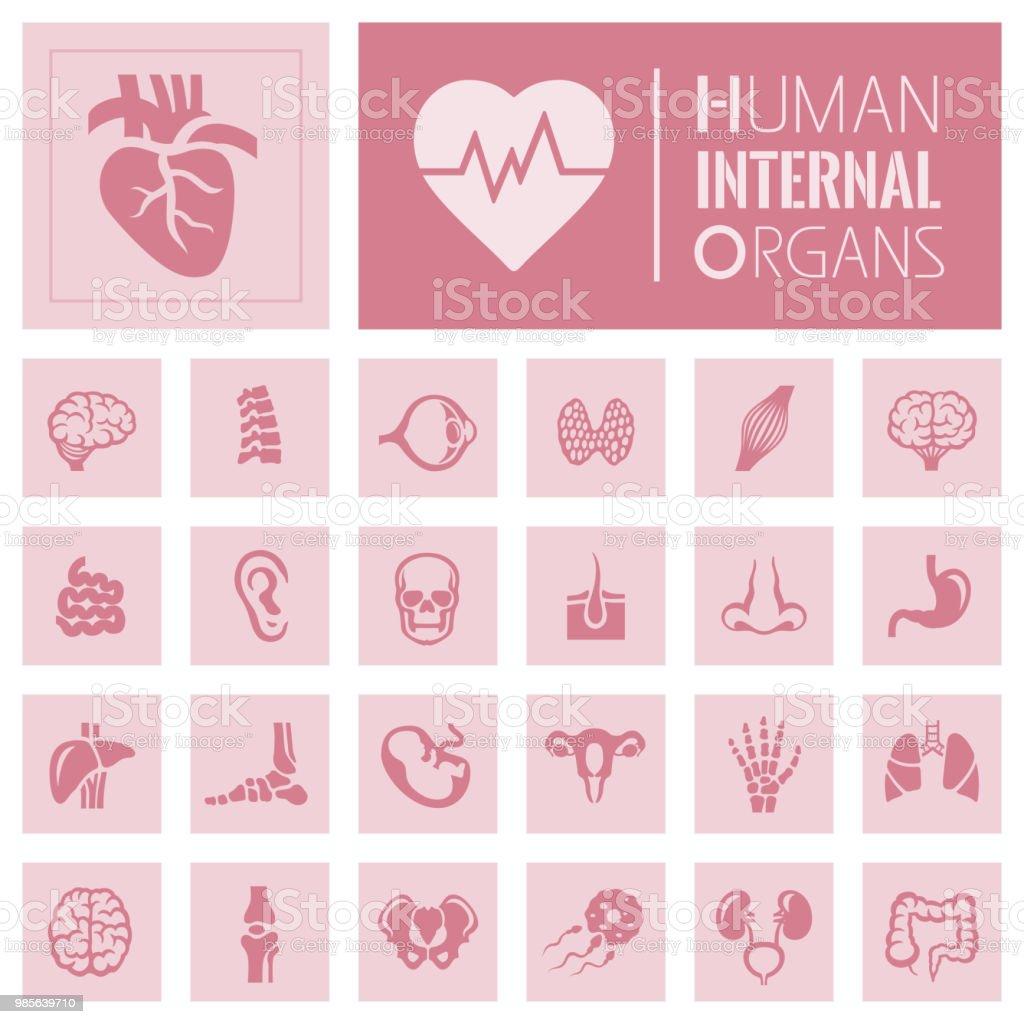 Menschliche Innere Organ Symbole Stock Vektor Art und mehr Bilder ...