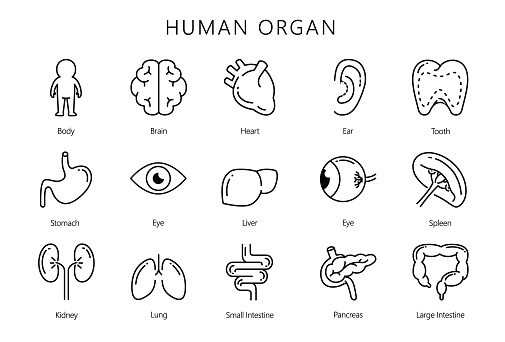 Human internal organ in line icon style collection.
