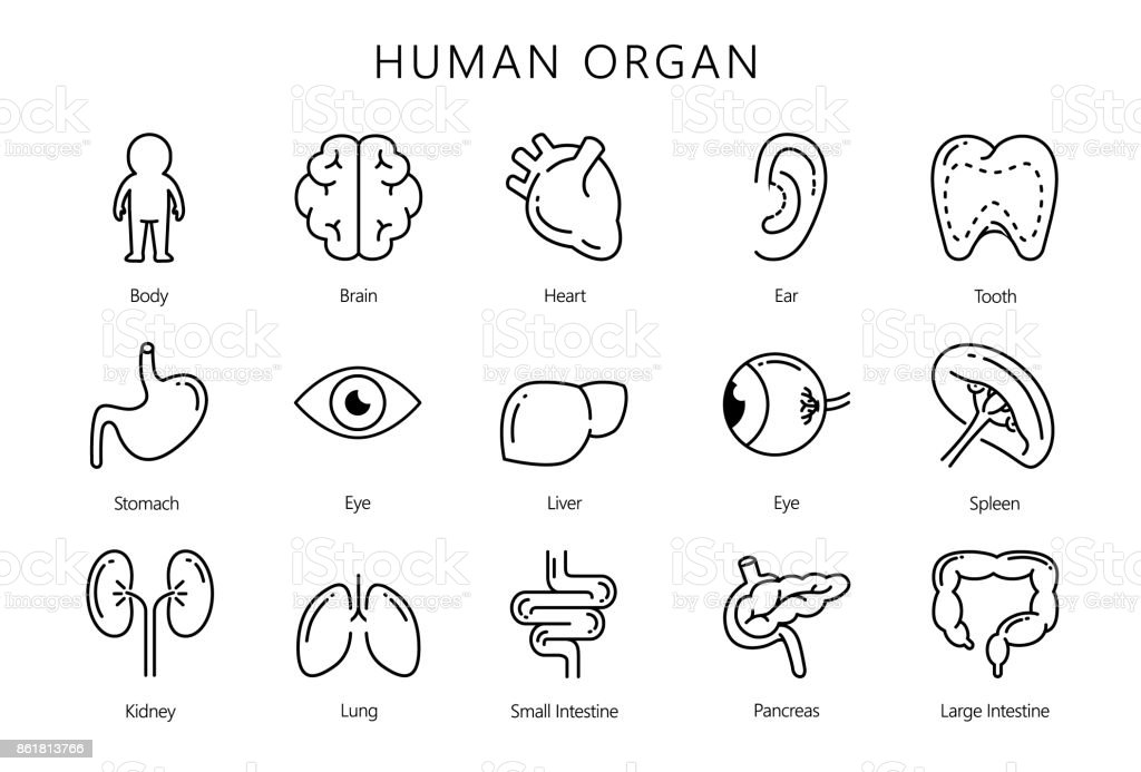 Human internal organ in line icon style collection. vector art illustration