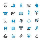 Human Internal Organ related vector icons