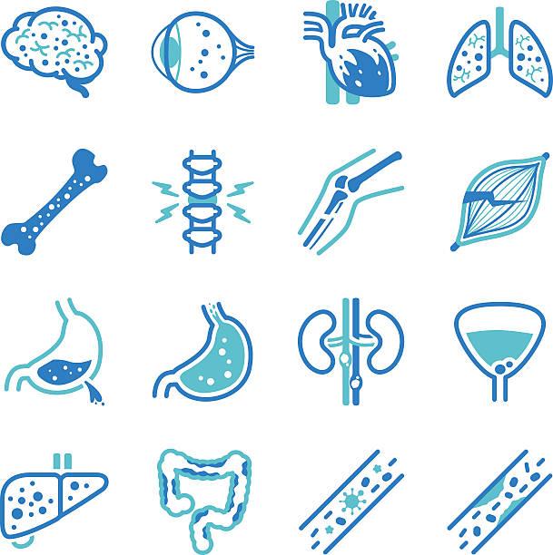 Human internal organ symptoms icon set human internal organ symptoms icons. abdomen stock illustrations
