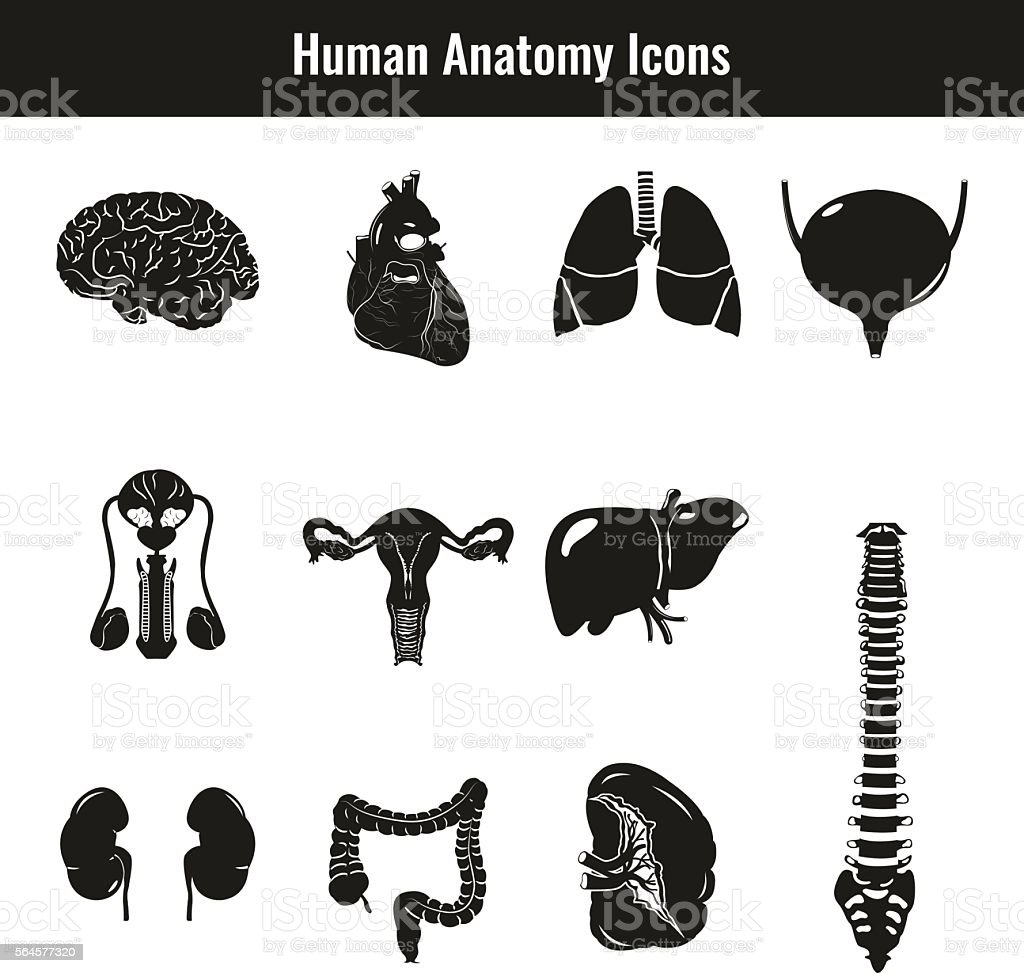 Human internal organs. Anatomy set. Vector icons vector art illustration