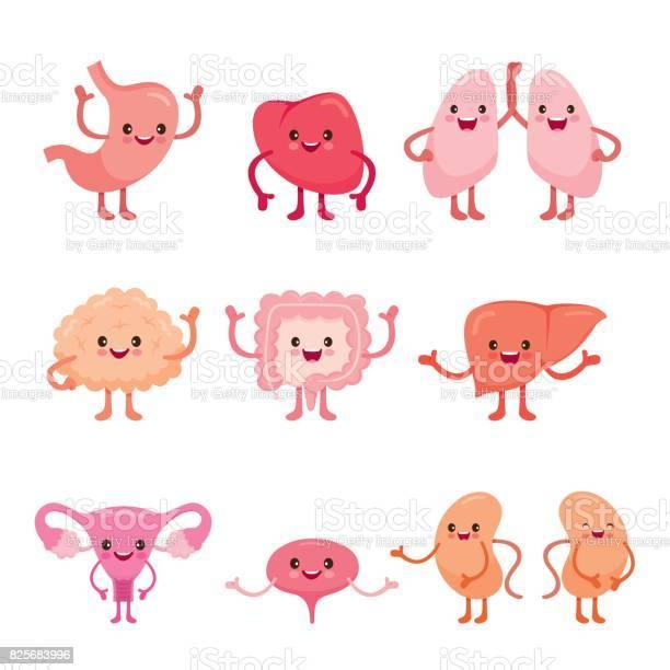 Human internal organs cartoon characters set vector id825683996?b=1&k=6&m=825683996&s=612x612&h=nqsbyhef fzquezprcsyl2nfkdqt5rjeobvcypwvnwc=