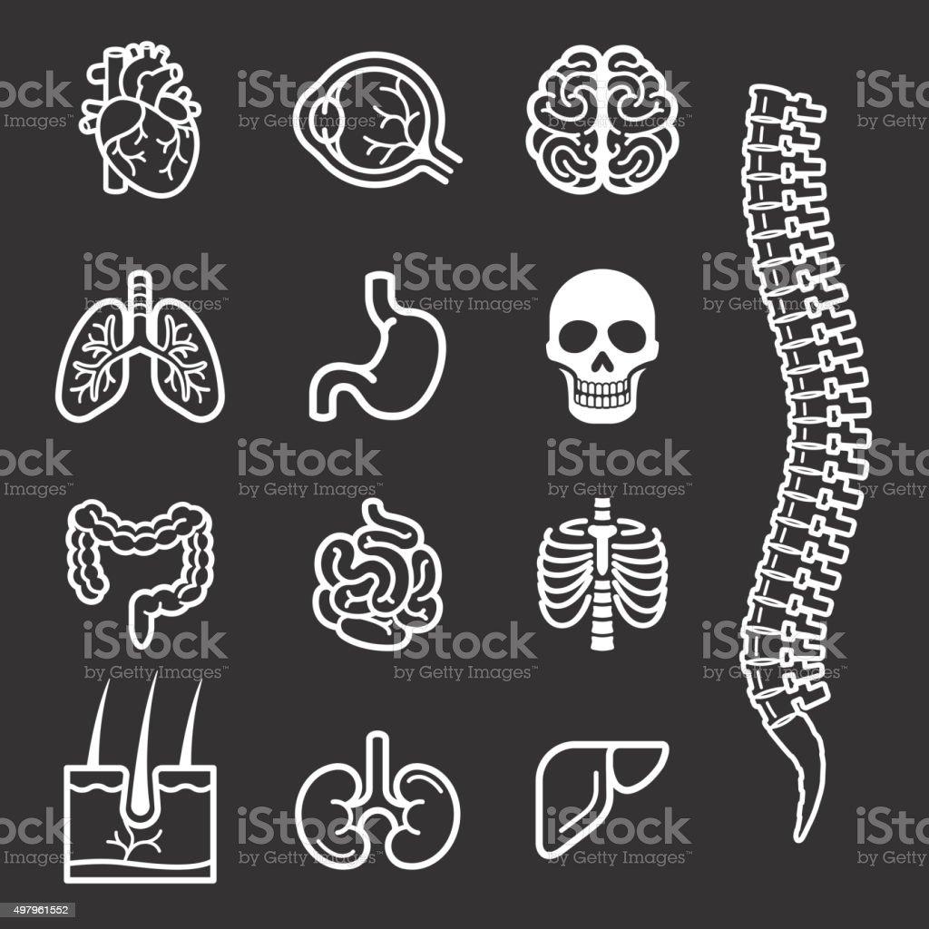 Menschliche Organe detaillierte Symbole set. – Vektorgrafik