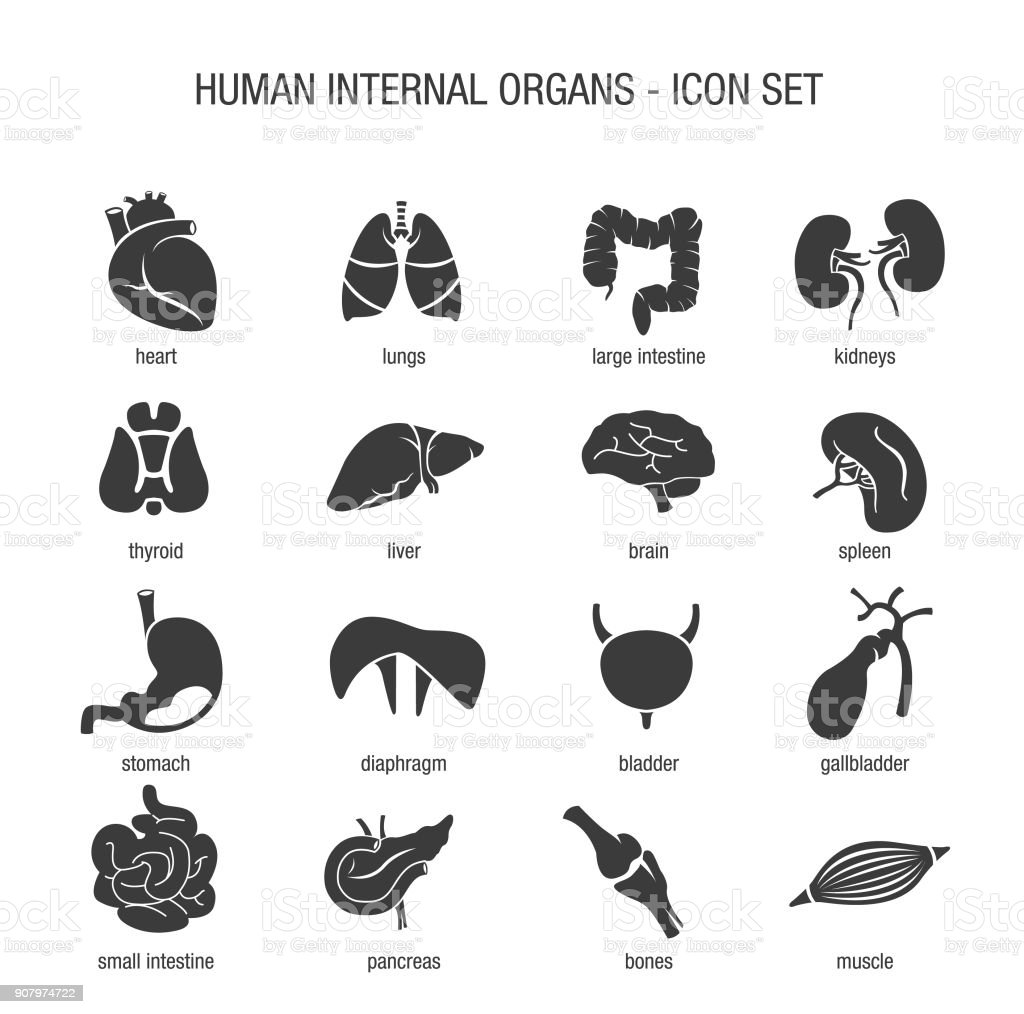 Human Internal Organs Icon Set vector art illustration