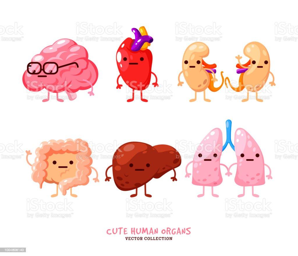 Menschliche Organe Illustrationen Lustige Menschlichen Körperorganen ...