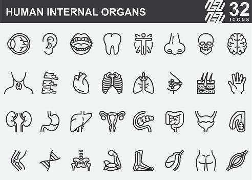 Human Internal Organs Line Icons