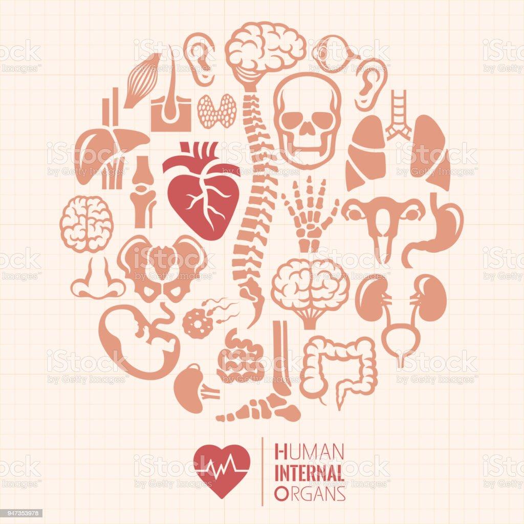 Ilustración de Montaje De órganos Internos Humanos y más banco de ...