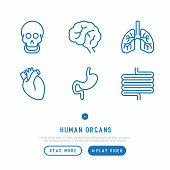 Human internal organs thin line icons set: skull, brain, lungs, heart, stomach, intestines. Vector illustration.