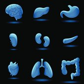 Human internal organ illustrations on black.
