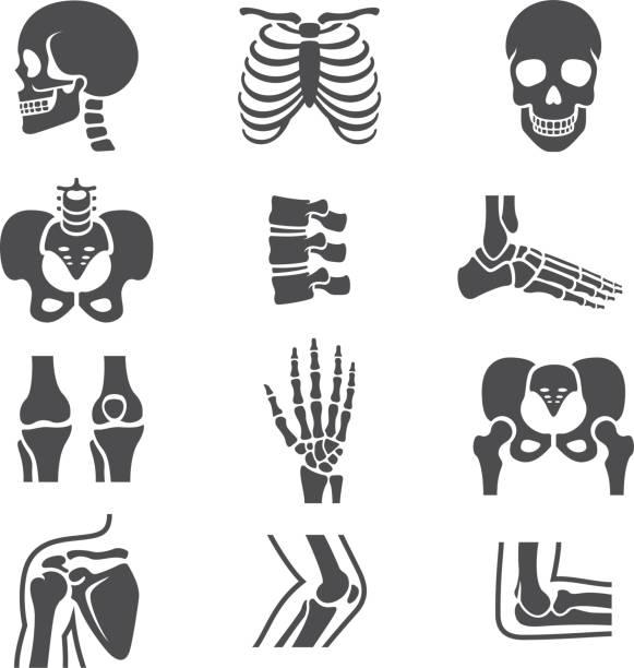 ilustrações de stock, clip art, desenhos animados e ícones de conjunto de ícones de articulações humanas - tronco nu