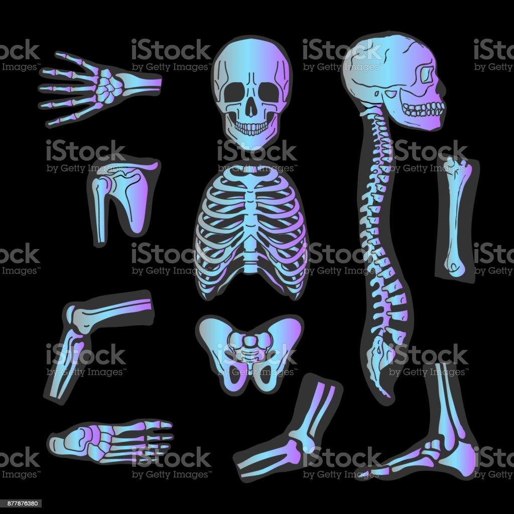 Menschliche Gelenke Vektorsatz Xray Hersteller Von Orthopädischen ...