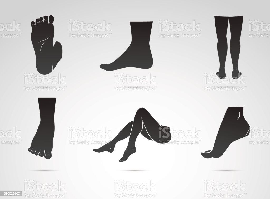 Menschliches Bein Fuß Vektor Icon Isoliert Auf Weißem Hintergrund ...