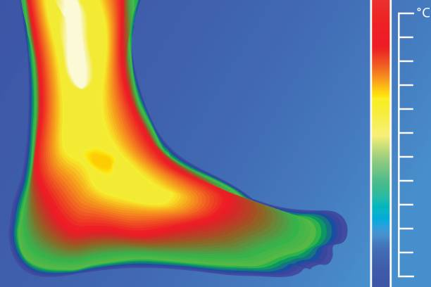 menschliches bein. wärmebildkamera mit temperaturskala. - infrarotfotografie stock-grafiken, -clipart, -cartoons und -symbole