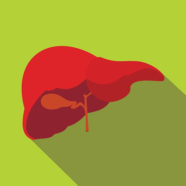 Human liver flat icon with shadow – Vektorgrafik