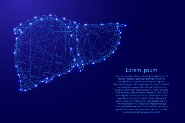 Human liver organ gland of external secretion body from futuristic polygonal blue lines and glowing stars for banner, poster, greeting card. Vector illustration. vector art illustration