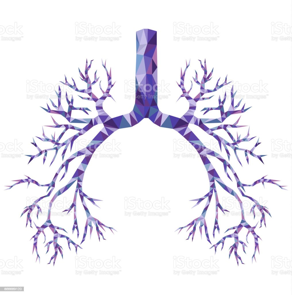 Human low poly bronchus with trachea, carina in purple and blue. Human organ. vector art illustration