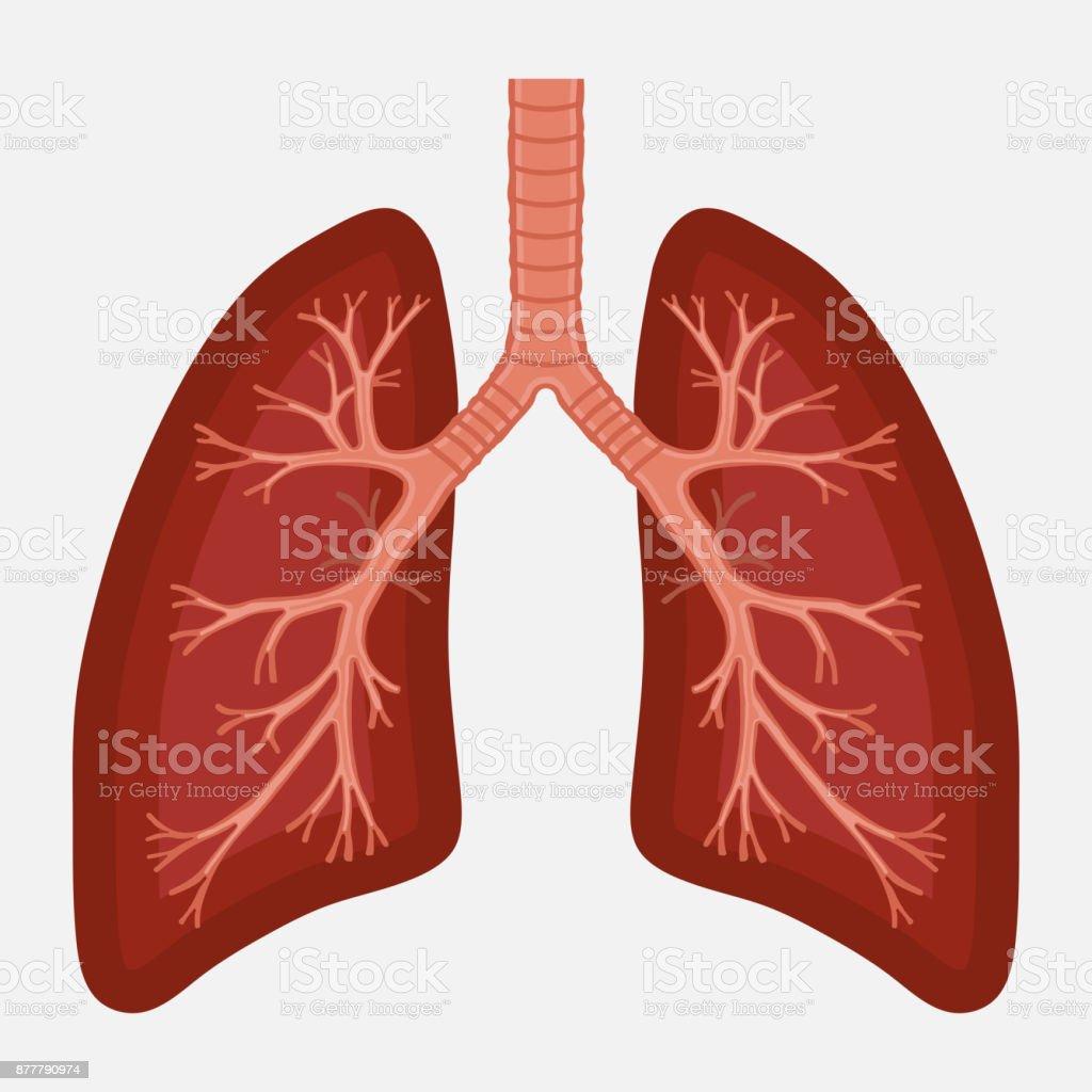 Human Lung Anatomy Diagram Illness Respiratory Cancer Stock Vector ...